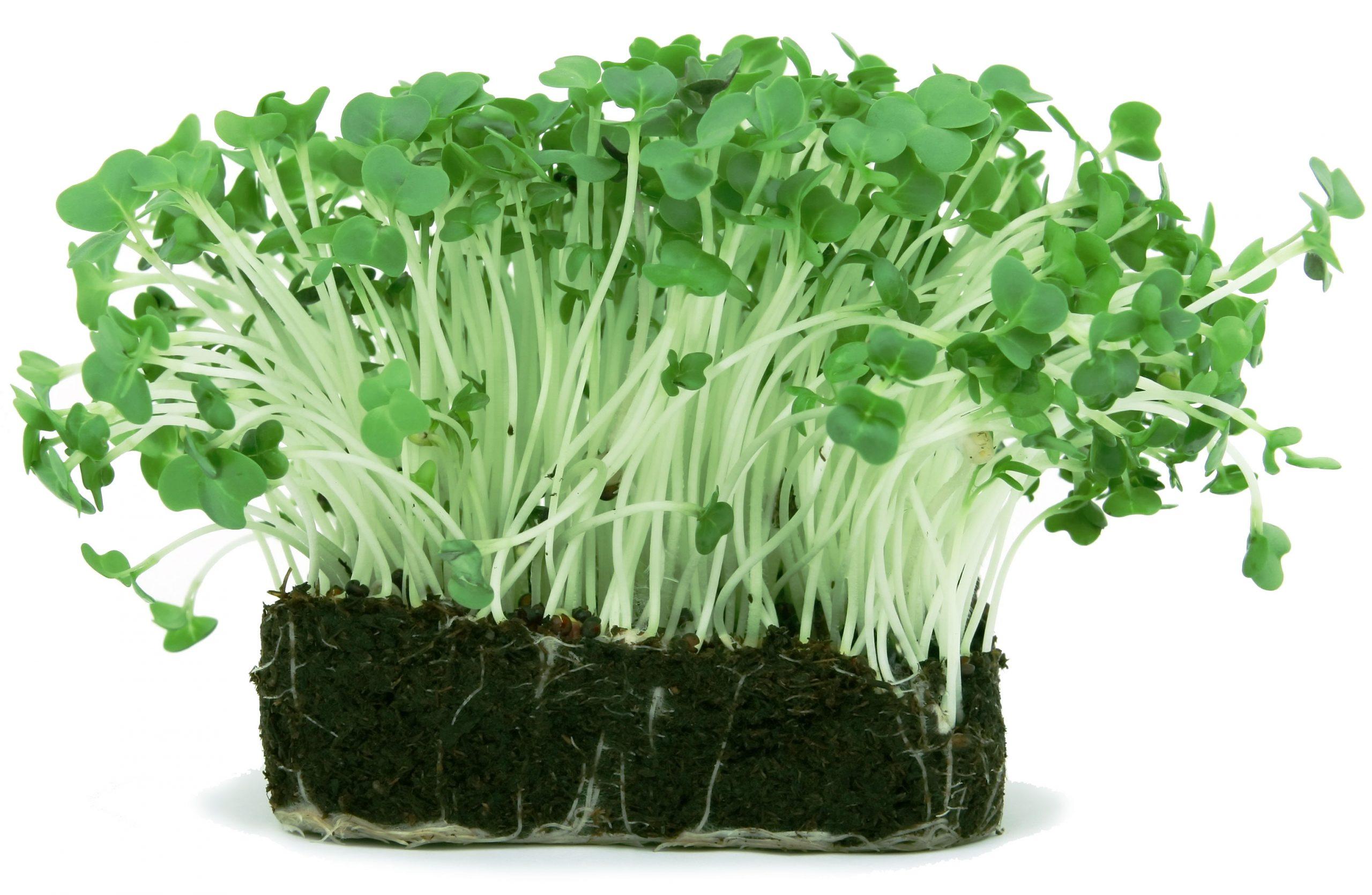 Wittmer Soil Solutions